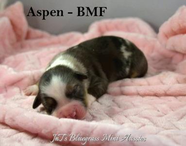 Aspen-WM3-3