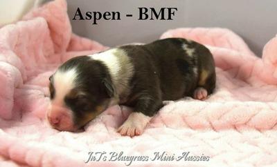 Aspen-WM4-4
