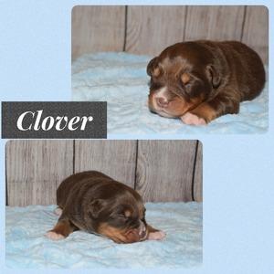 Clover - 1 week old